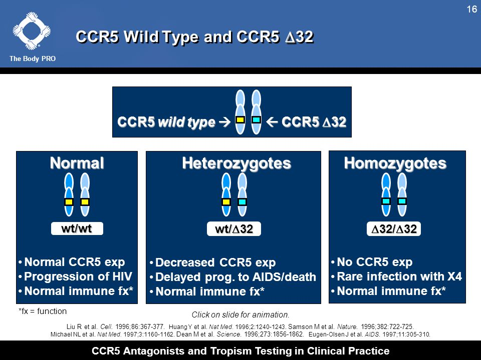 The Body PRO CCR5 Antagonists and Tropism Testing in Clinical Practice 16  CCR5 Wild Type and CCR5  32 CCR5 wild type   CCR5  32 wt/wt wt/  32 