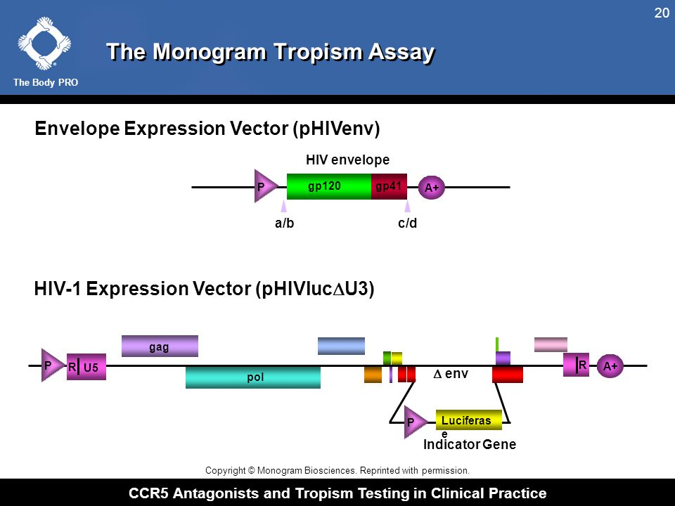 The Body PRO CCR5 Antagonists and Tropism Testing in Clinical Practice 20 The Monogram Tropism Assay HIV-1 Expression Vector (pHIVluc  U3) Envelope E