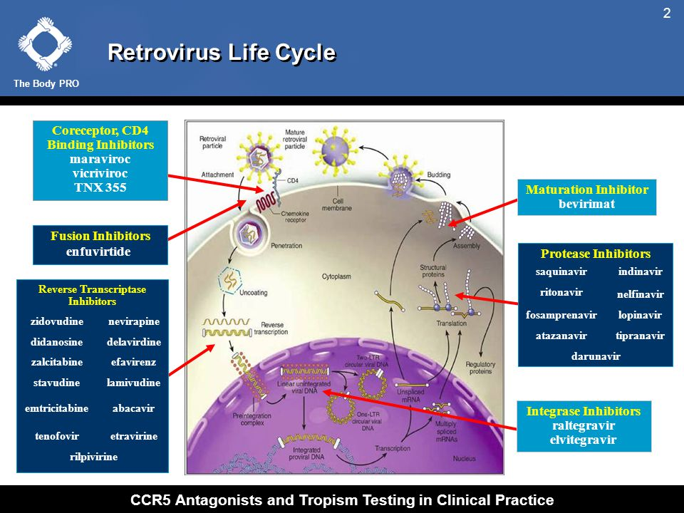 The Body PRO CCR5 Antagonists and Tropism Testing in Clinical Practice 2 Retrovirus Life Cycle Coreceptor, CD4 Binding Inhibitors maraviroc vicriviroc