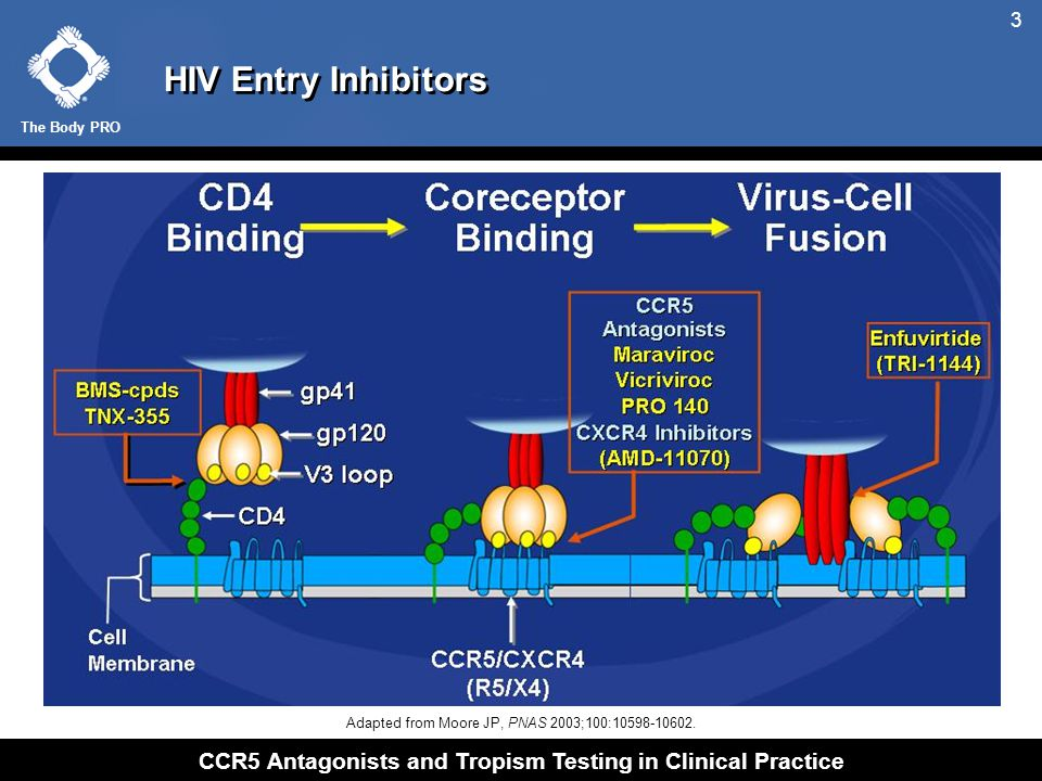 The Body PRO CCR5 Antagonists and Tropism Testing in Clinical Practice 4 Targets Involved in HIV Entry Copyright © 2002-2008 Pfizer Inc.
