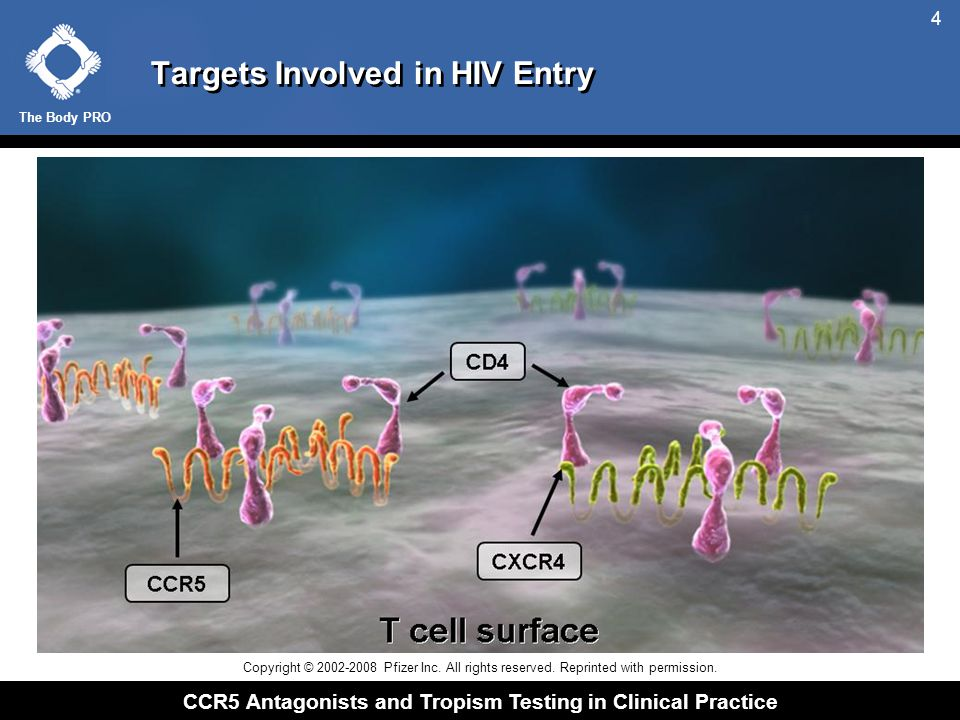 The Body PRO CCR5 Antagonists and Tropism Testing in Clinical Practice 4 Targets Involved in HIV Entry Copyright © 2002-2008 Pfizer Inc. All rights re