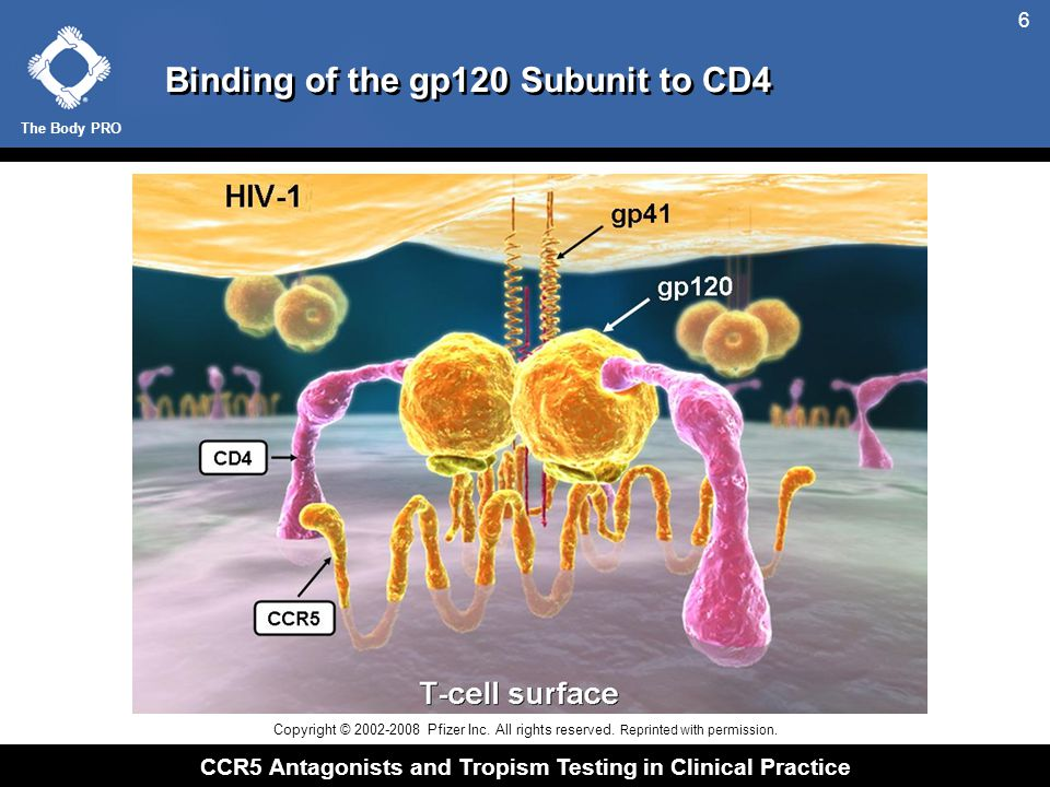 The Body PRO CCR5 Antagonists and Tropism Testing in Clinical Practice 17  Patients Heterozygous for CCR5  32 Have Slower Progression to AIDS and Death Adapted from de Roda Husman A-M, et al.