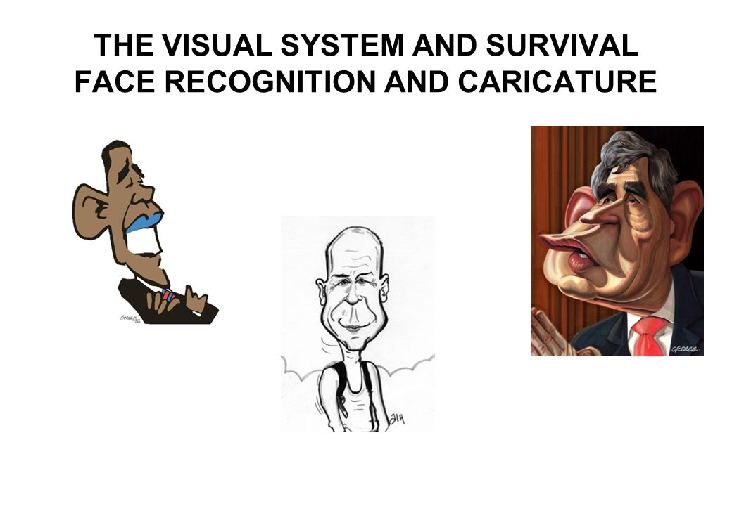 THE VISUAL SYSTEM AND SURVIVAL FACE RECOGNITION AND CARICATURE
