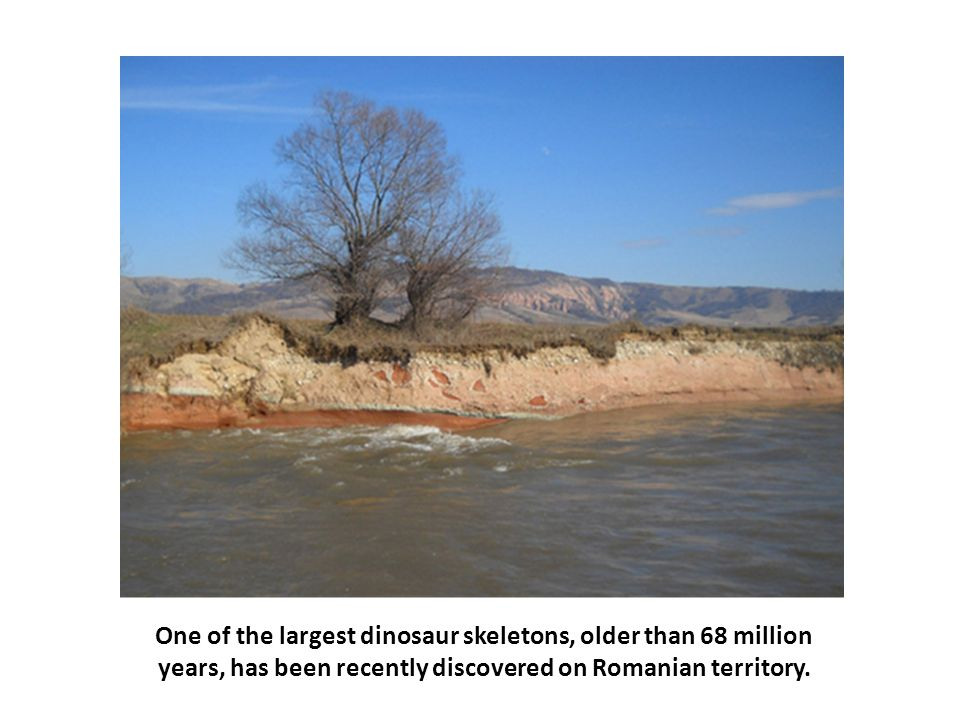One of the largest dinosaur skeletons, older than 68 million years, has been recently discovered on Romanian territory.