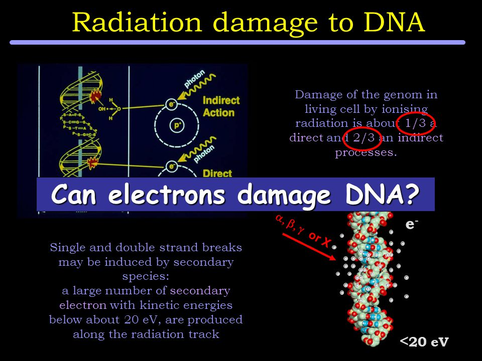  or X e-e- < 20 eV Single and double strand breaks may be induced by secondary species: a large number of secondary electron with kinetic energies below about 20 eV, are produced along the radiation track Damage of the genom in living cell by ionising radiation is about 1/3 a direct and 2/3 an indirect processes.