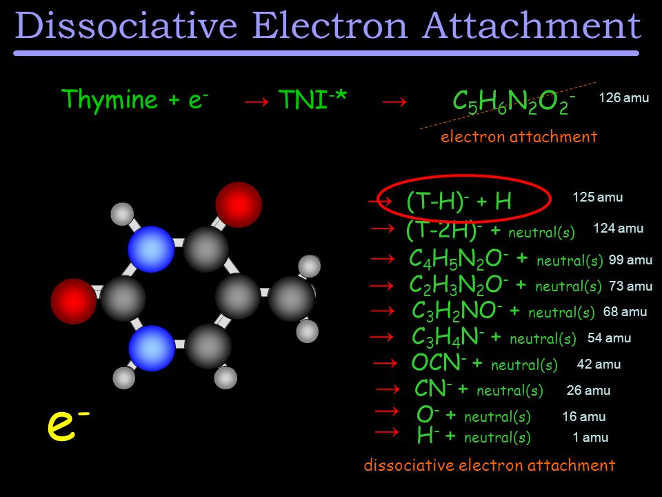 Thymine + e - → TNI - * → electron attachment C5H6N2O2-C5H6N2O2- e-e- dissociative electron attachment (T-H) - + H (T-2H) - + neutral(s) C 4 H 5 N 2 O - + neutral(s) C 2 H 3 N 2 O - + neutral(s) C 3 H 2 NO - + neutral(s) CN - + neutral(s) O - + neutral(s) H - + neutral(s) OCN - + neutral(s) → → → → → → C 3 H 4 N - + neutral(s) → → → → Dissociative Electron Attachment 126 amu 125 amu 124 amu 1 amu 16 amu 26 amu 42 amu 54 amu 68 amu 99 amu 73 amu