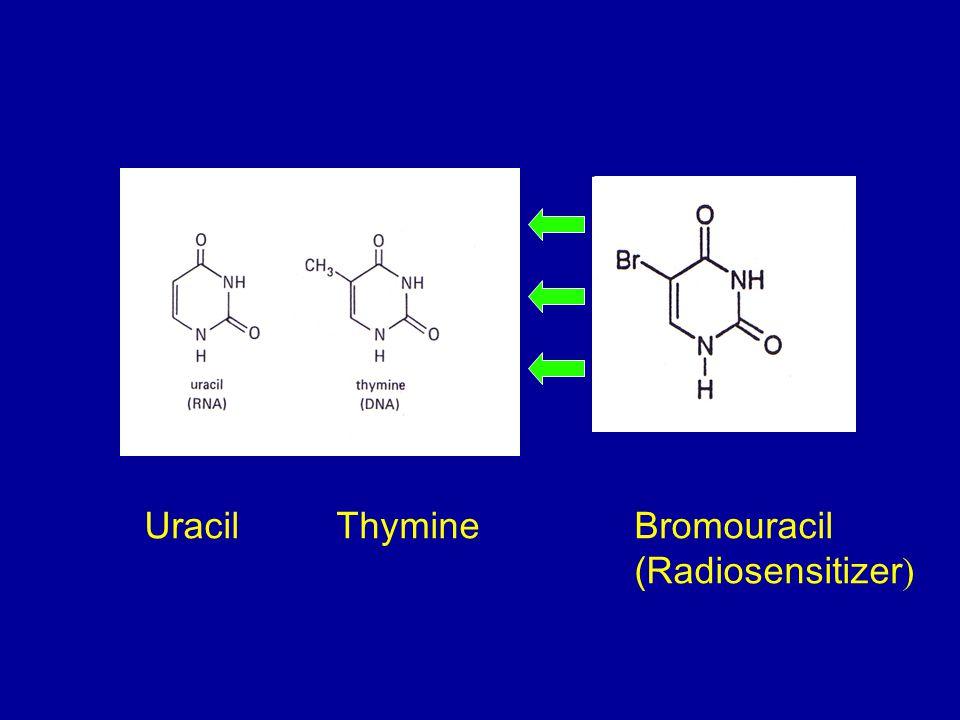 UracilThymine Bromouracil (Radiosensitizer )
