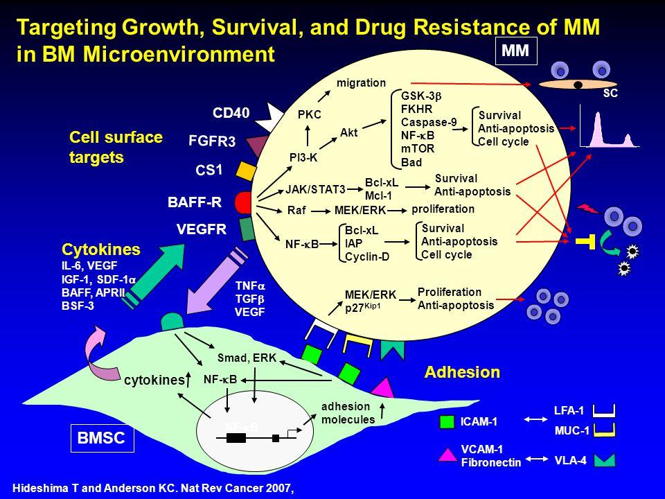 VCAM-1 Fibronectin ICAM-1 LFA-1 MUC-1 VLA-4 Cytokines IL-6, VEGF IGF-1, SDF-1  BAFF, APRIL BSF-3 TNF  TGF  VEGF NF-  B BMSC adhesion molecules NF-  B Smad, ERK JAK/STAT3 MEK/ERK PI3-K GSK-3  FKHR Caspase-9 NF-  B mTOR Bad PKC Bcl-xL Mcl-1 MEK/ERK p27 Kip1 NF-  B Bcl-xL IAP Cyclin-D MM Survival Anti-apoptosis Cell cycle Survival Anti-apoptosis Cell cycle proliferation Survival Anti-apoptosis Akt migration Proliferation Anti-apoptosis cytokines Raf FGFR3 Adhesion Targeting Growth, Survival, and Drug Resistance of MM in BM Microenvironment Hideshima T and Anderson KC.