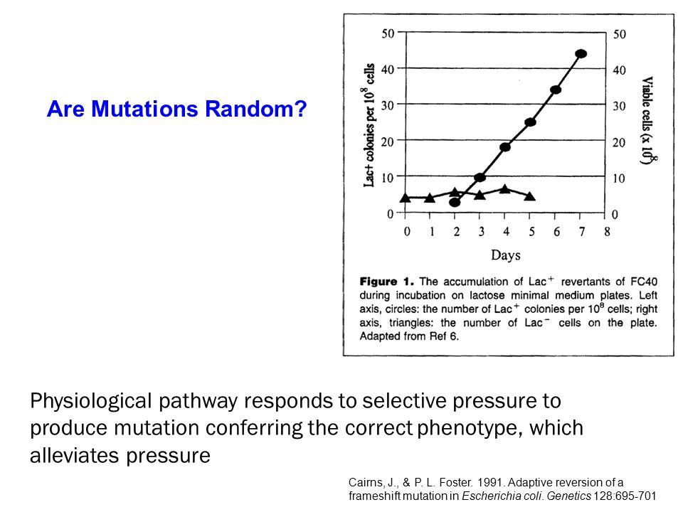 Mutation Rates after 10,000 Generations of Evolution Ancestral PopulationHigh Mutation Lines FROM: Sniegowski et al.