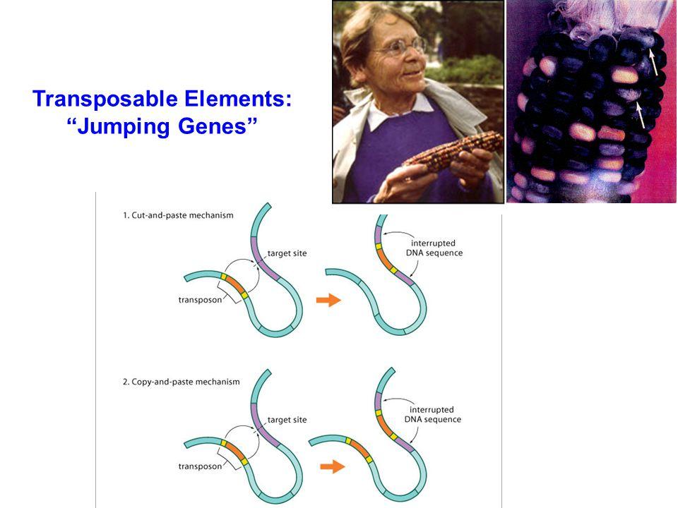 Chromosomal InversionsChromosomal Fusions