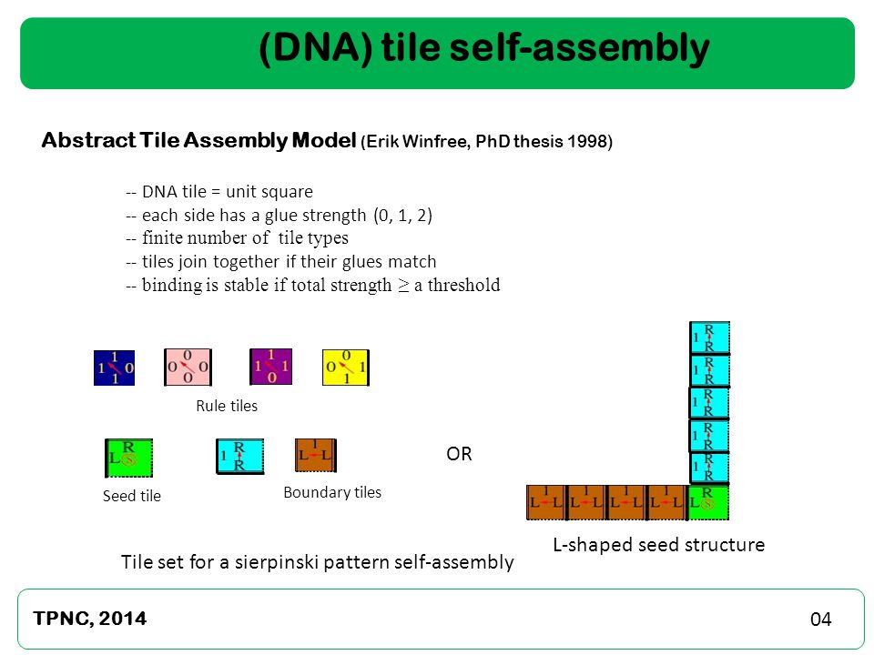 (DNA) tile self-assembly L-shaped seed 01 TPNC, 2014 05