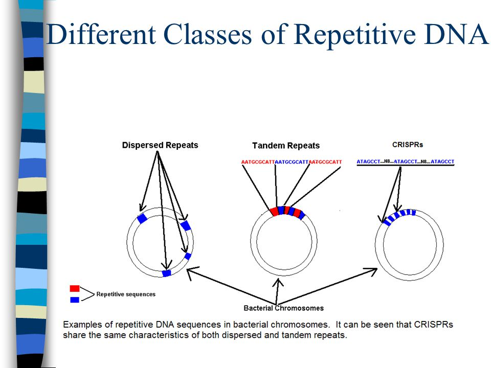 Different Classes of Repetitive DNA