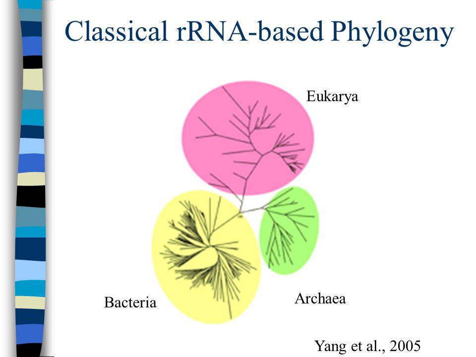 Classical rRNA-based Phylogeny Archaea Eukarya Bacteria Yang et al., 2005