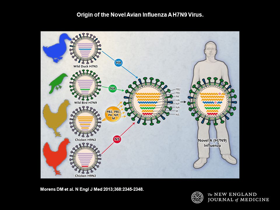 Origin of the Novel Avian Influenza A H7N9 Virus. Morens DM et al. N Engl J Med 2013;368:2345-2348.