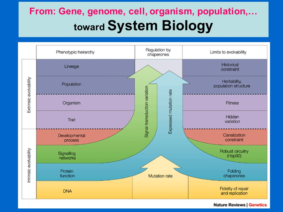 From: Gene, genome, cell, organism, population,… toward System Biology