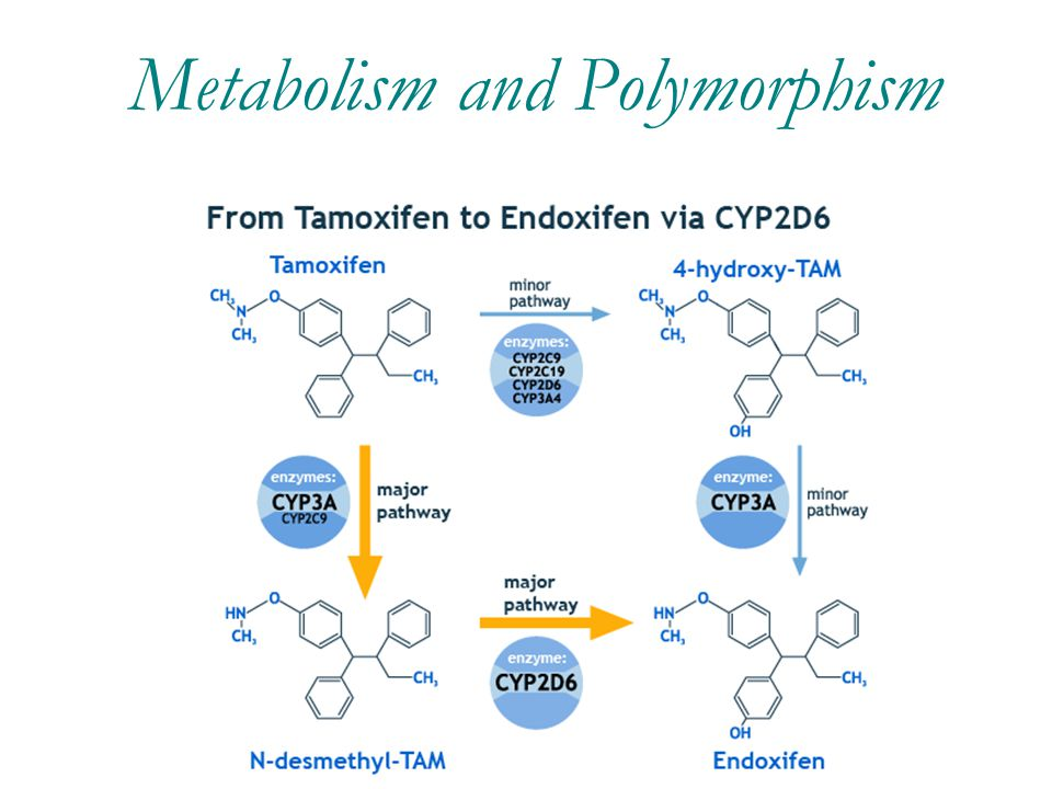 Metabolism and Polymorphism