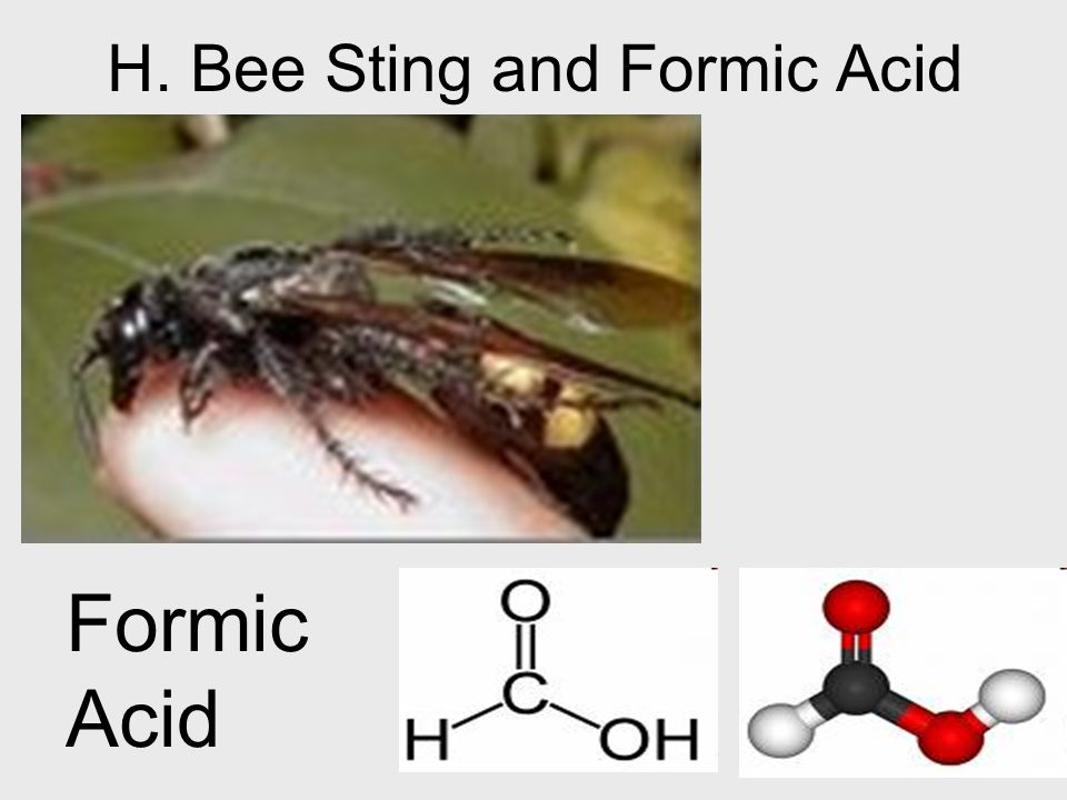 H. Bee Sting and Formic Acid Formic Acid