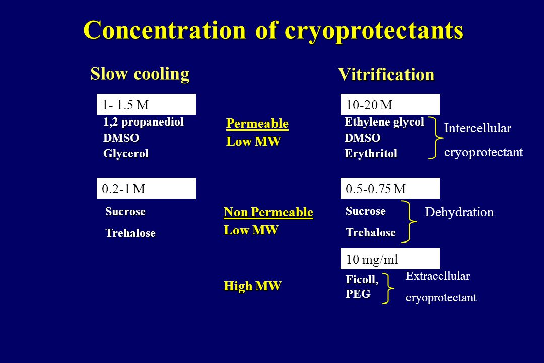 Concentration of cryoprotectants Permeable Low MW Non Permeable Low MW High MW Vitrification Ethylene glycol Ethylene glycol DMSO DMSO Erythritol Erythritol Intercellular cryoprotectant SucroseTrehalose Dehydration Ficoll, PEG Extracellular cryoprotectant 10-20 M 0.5-0.75 M 10 mg/ml Slow cooling 1,2 propanediol DMSOGlycerol SucroseTrehalose 0.2-1 M 1- 1.5 M