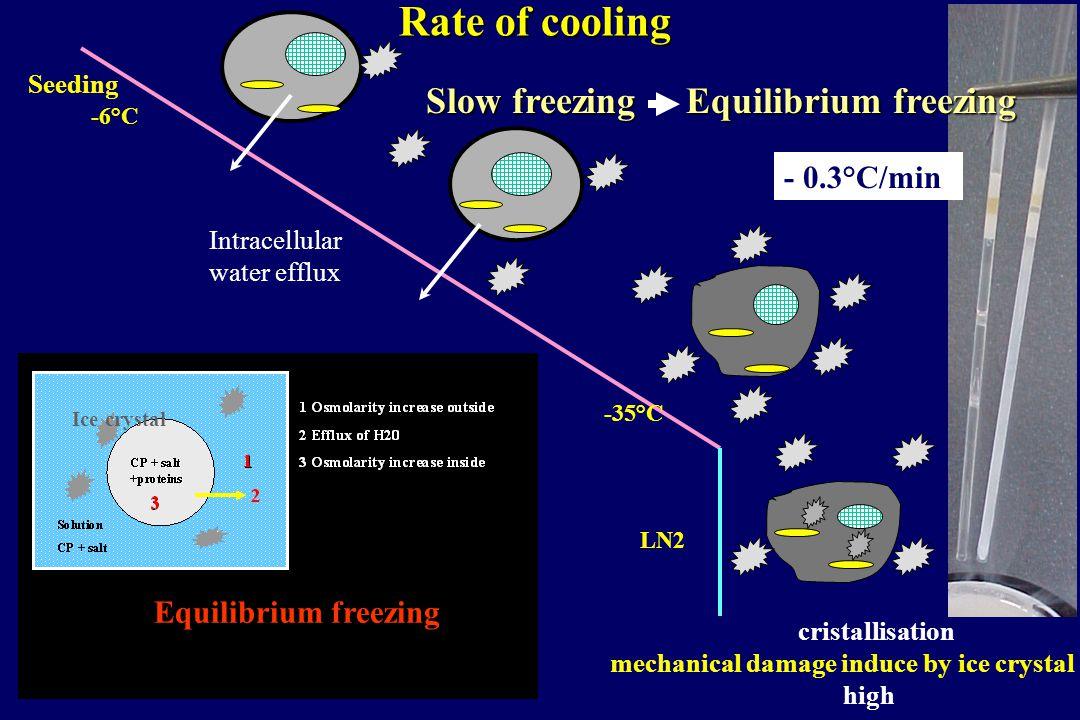 -6°C -35°C - 0.3°C/min Equilibrium freezing Slow freezing Equilibrium freezing Rate of cooling Ice crystal Seeding LN2 cristallisation mechanical dama