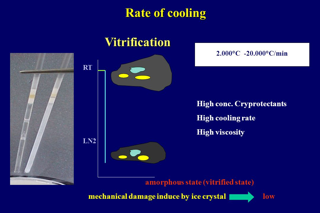 Vitrification Rate of cooling LN2 RT 2.000°C -20.000°C/min High conc. Cryprotectants High cooling rate High viscosity amorphous state (vitrified state