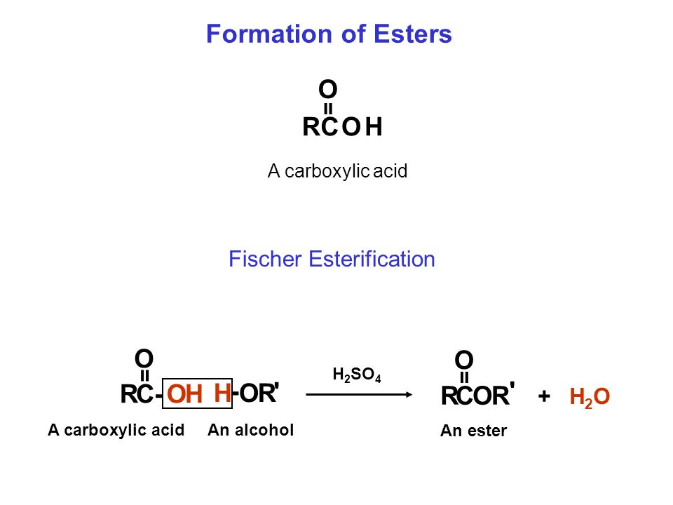 Formation of Esters RCOH O A carboxylic acid = Fischer Esterification RCOR ' O RC-OH O H - O R ' = = An alcohol A carboxylic acid An ester H 2 SO 4 +