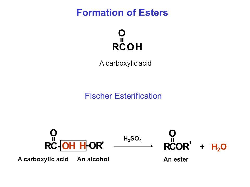 Formation of Esters RCOH O A carboxylic acid = Fischer Esterification RCOR O RC-OH O H - O R = = An alcohol A carboxylic acid An ester H 2 SO 4 + H 2 O