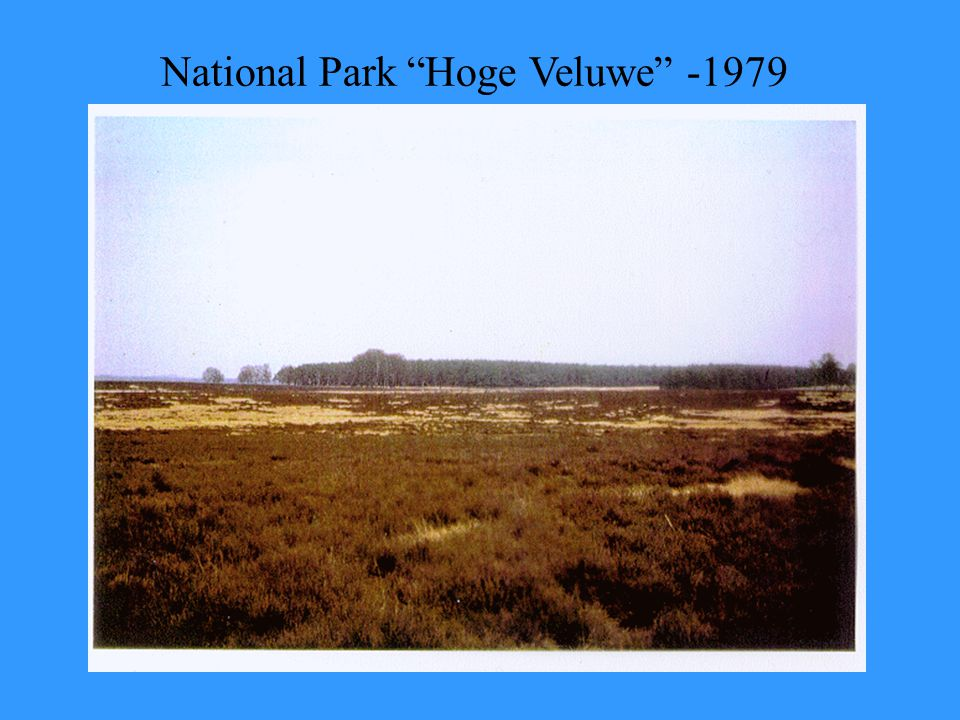 "National Park ""Hoge Veluwe"" -1979"