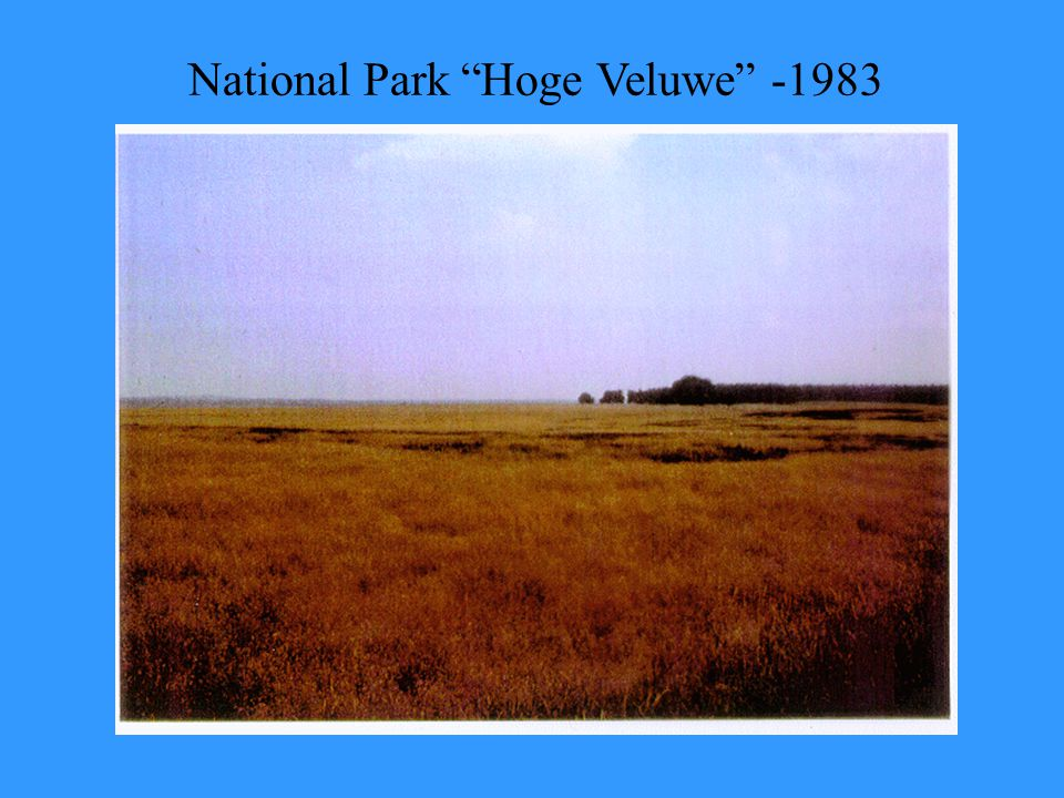 "National Park ""Hoge Veluwe"" -1983"