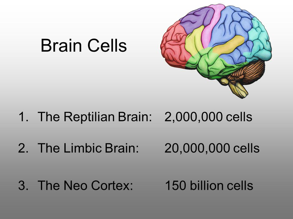 Brain Cells 1.The Reptilian Brain: 2,000,000 cells 2.The Limbic Brain:20,000,000 cells 3.The Neo Cortex:150 billion cells