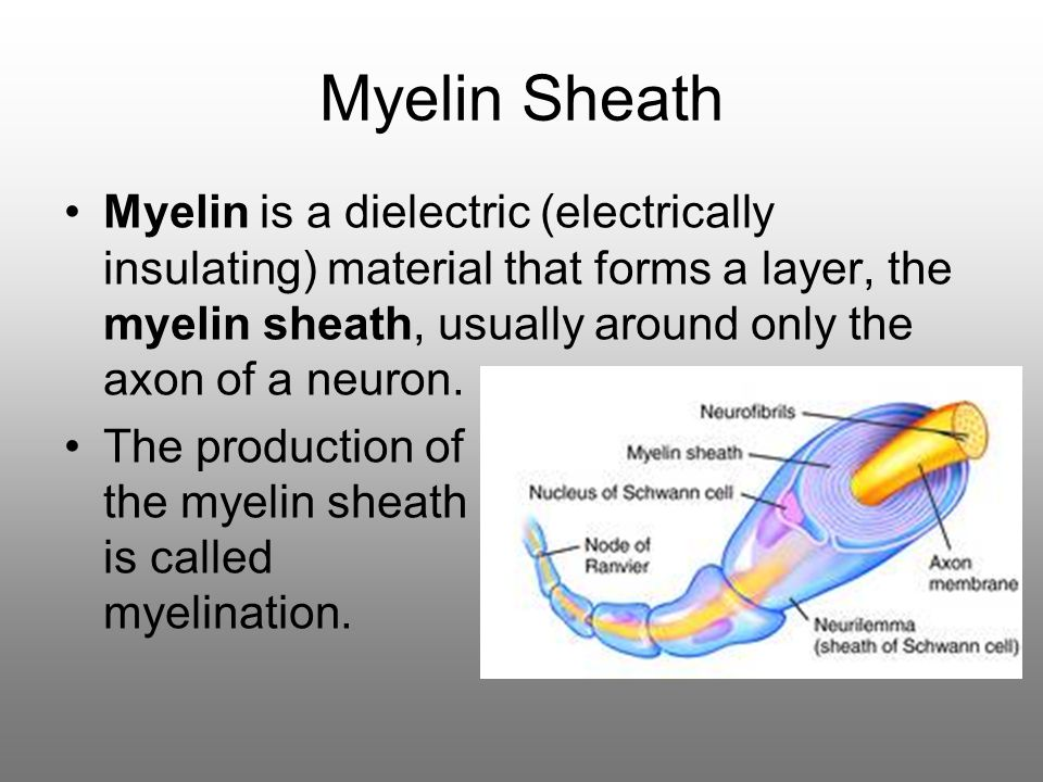 Myelin Sheath Myelin is a dielectric (electrically insulating) material that forms a layer, the myelin sheath, usually around only the axon of a neuron.
