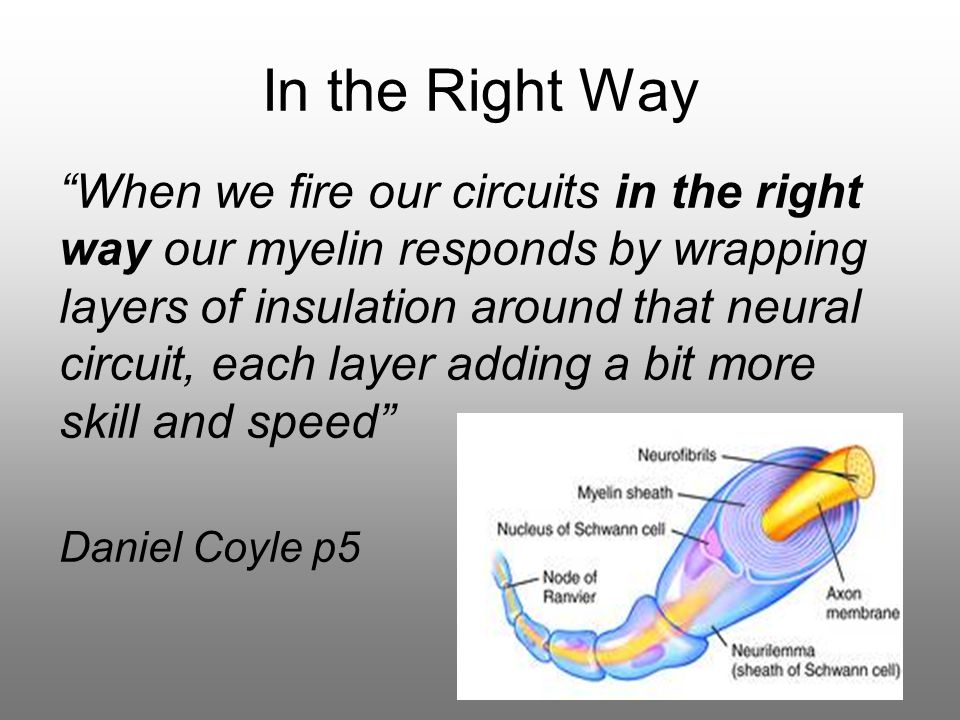 In the Right Way When we fire our circuits in the right way our myelin responds by wrapping layers of insulation around that neural circuit, each layer adding a bit more skill and speed Daniel Coyle p5