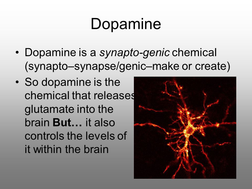 Dopamine Dopamine is a synapto-genic chemical (synapto–synapse/genic–make or create) So dopamine is the chemical that releases glutamate into the brain But… it also controls the levels of it within the brain