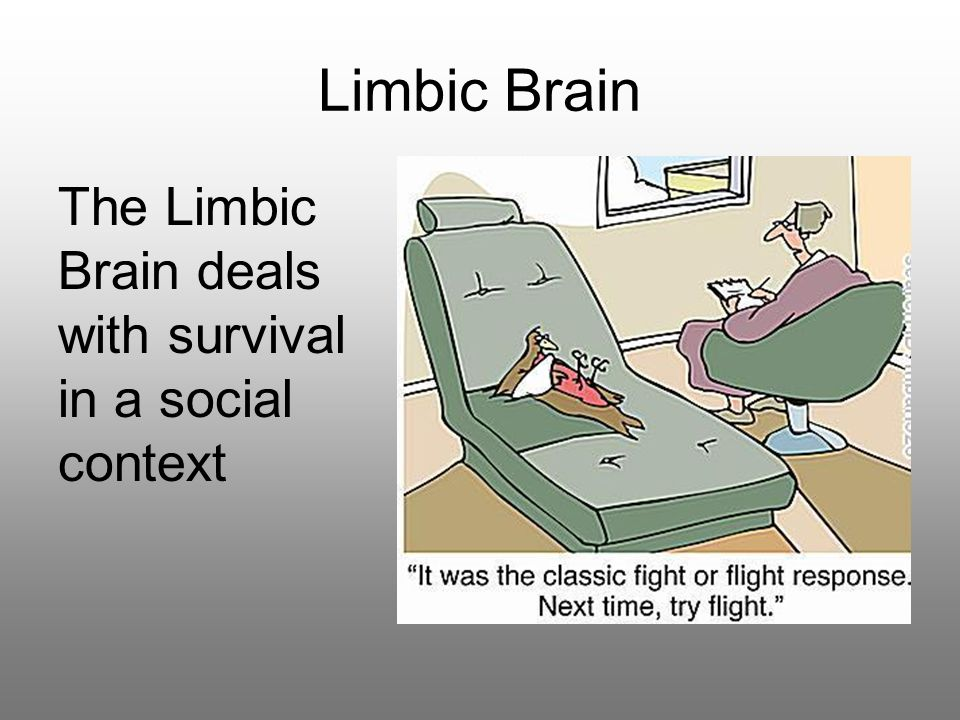 Limbic Brain The Limbic Brain deals with survival in a social context
