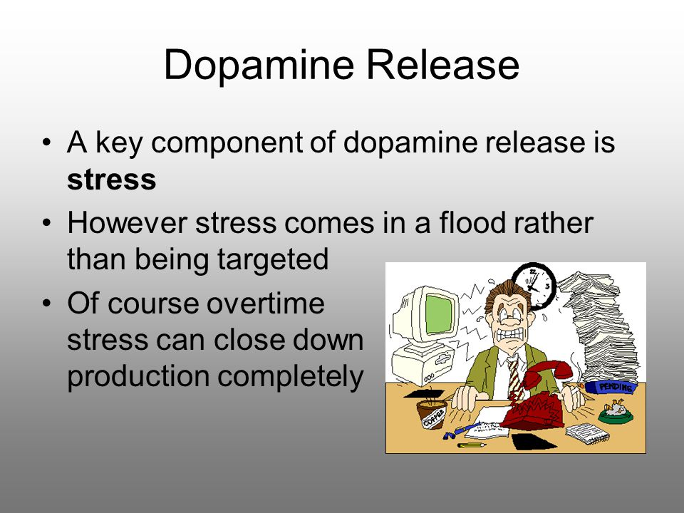 Dopamine Release A key component of dopamine release is stress However stress comes in a flood rather than being targeted Of course overtime stress can close down production completely