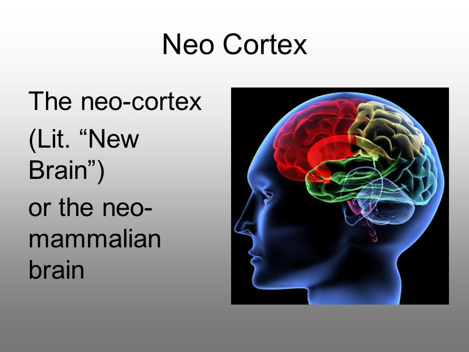 Neo Cortex The neo-cortex (Lit. New Brain ) or the neo- mammalian brain
