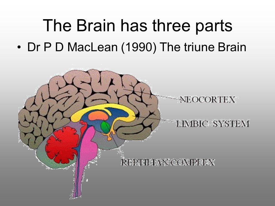 The Brain has three parts Dr P D MacLean (1990) The triune Brain