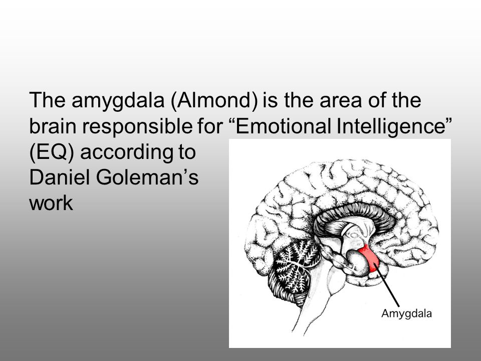 The amygdala (Almond) is the area of the brain responsible for Emotional Intelligence (EQ) according to Daniel Goleman's work
