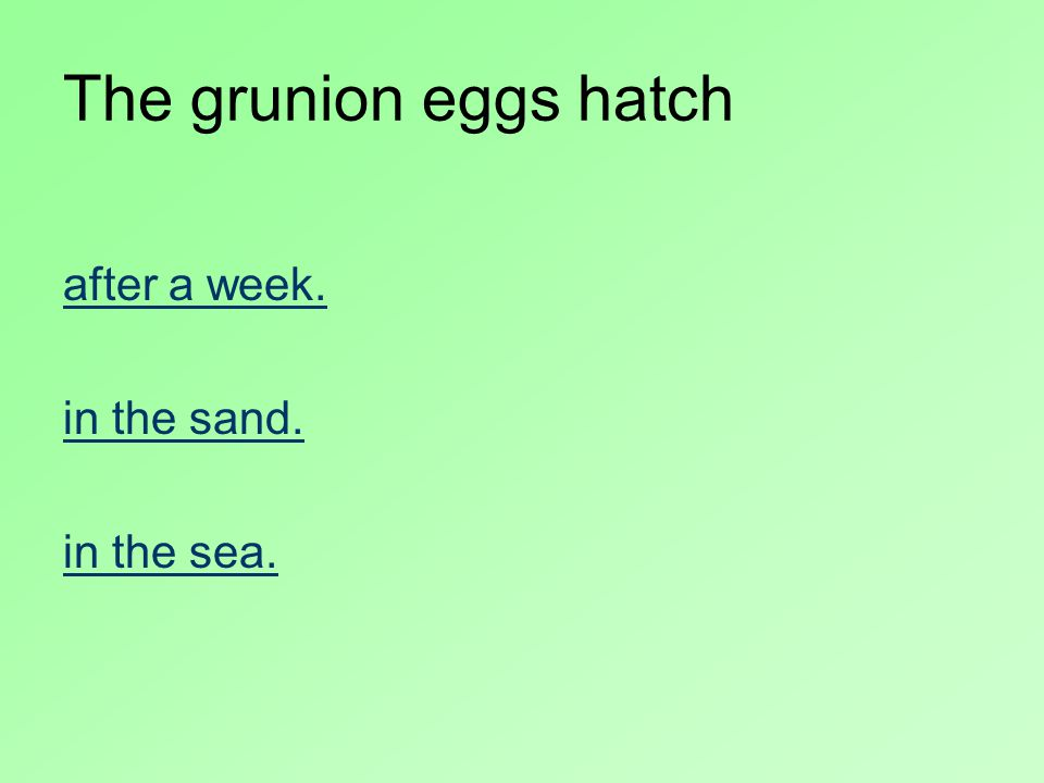 The grunion eggs hatch after a week. in the sand. in the sea.