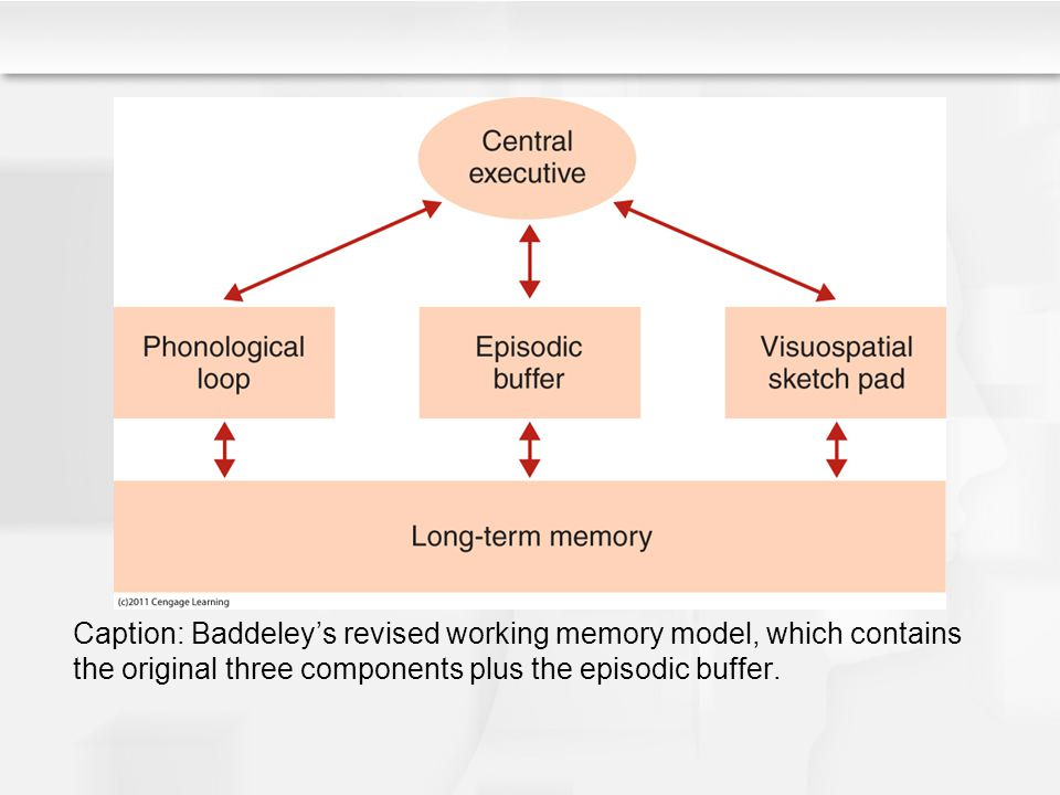 Caption: Baddeley's revised working memory model, which contains the original three components plus the episodic buffer.