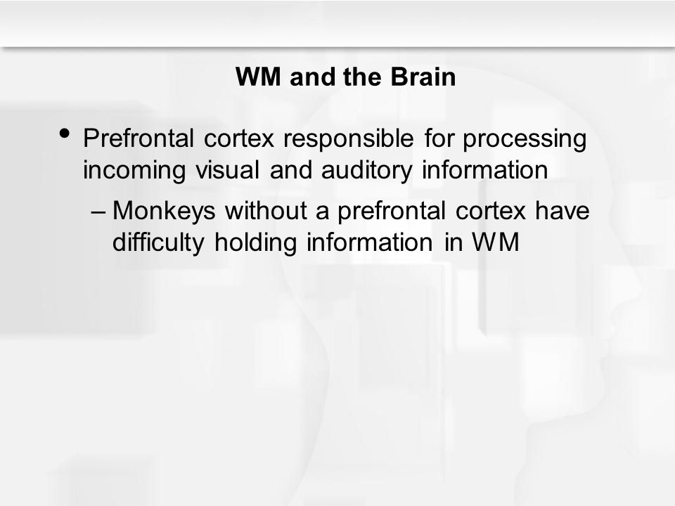 WM and the Brain Prefrontal cortex responsible for processing incoming visual and auditory information –Monkeys without a prefrontal cortex have diffi