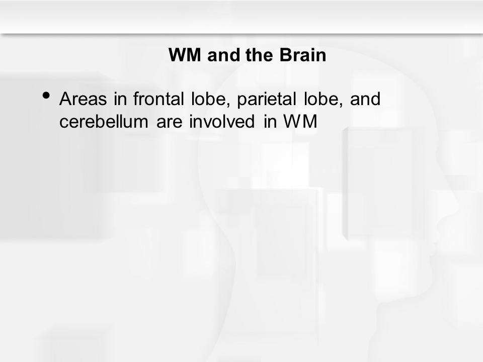 WM and the Brain Areas in frontal lobe, parietal lobe, and cerebellum are involved in WM