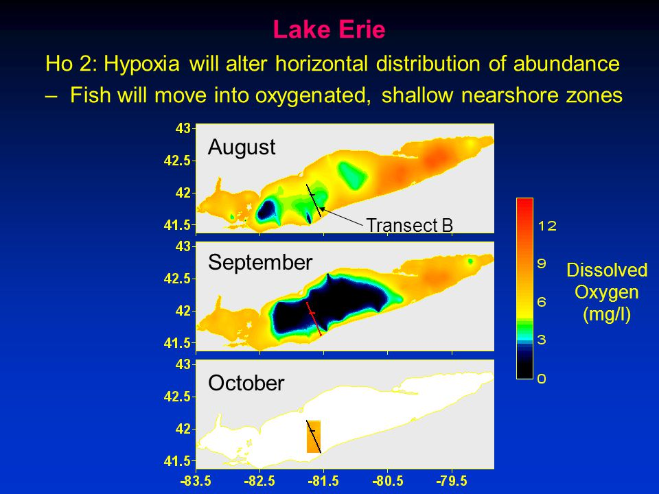 Dissolved Oxygen (mg/l) Transect B Ho 2: Hypoxia will alter horizontal distribution of abundance –Fish will move into oxygenated, shallow nearshore zones September August October Lake Erie