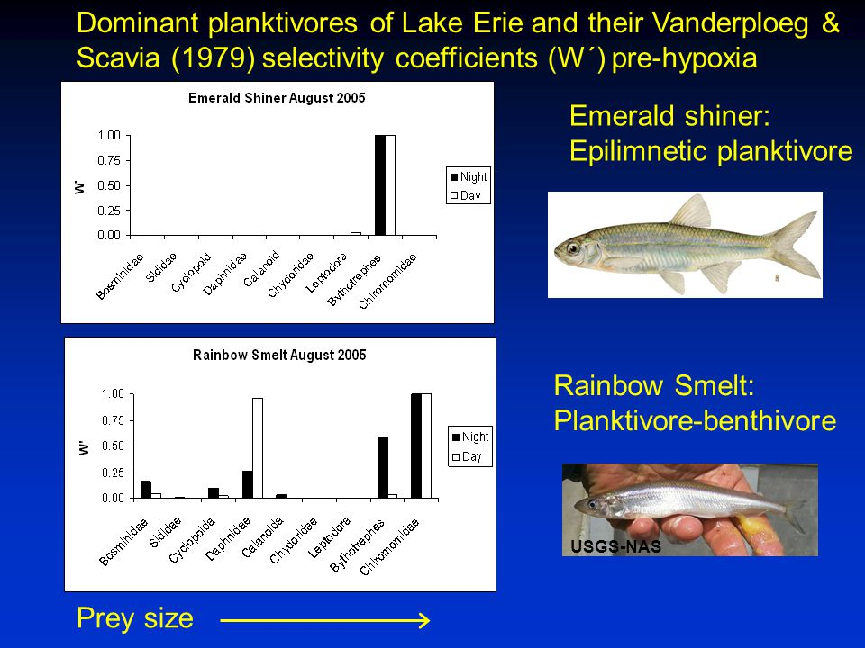 USGS-NAS Emerald shiner: Epilimnetic planktivore Rainbow Smelt: Planktivore-benthivore Dominant planktivores of Lake Erie and their Vanderploeg & Scavia (1979) selectivity coefficients (W´) pre-hypoxia Prey size