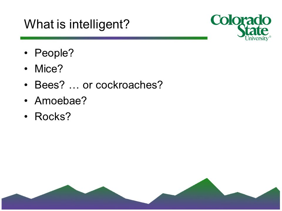 What is intelligent People Mice Bees … or cockroaches Amoebae Rocks