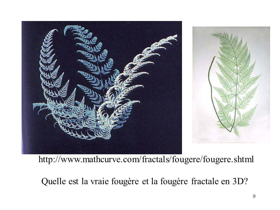 9 Quelle est la vraie fougère et la fougère fractale en 3D.