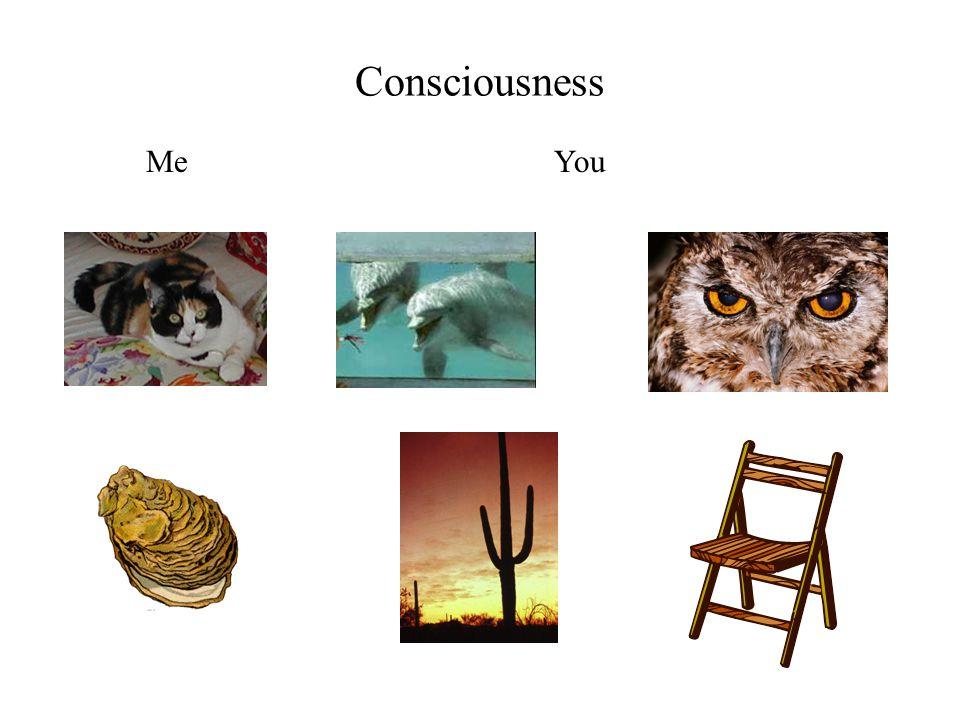 Consciousness MeYou