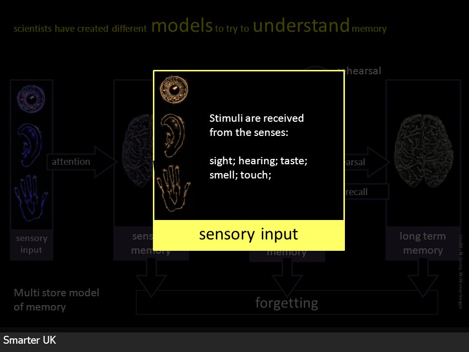 forgetting Smarter UK scientists have created different models to try to understand memory N.