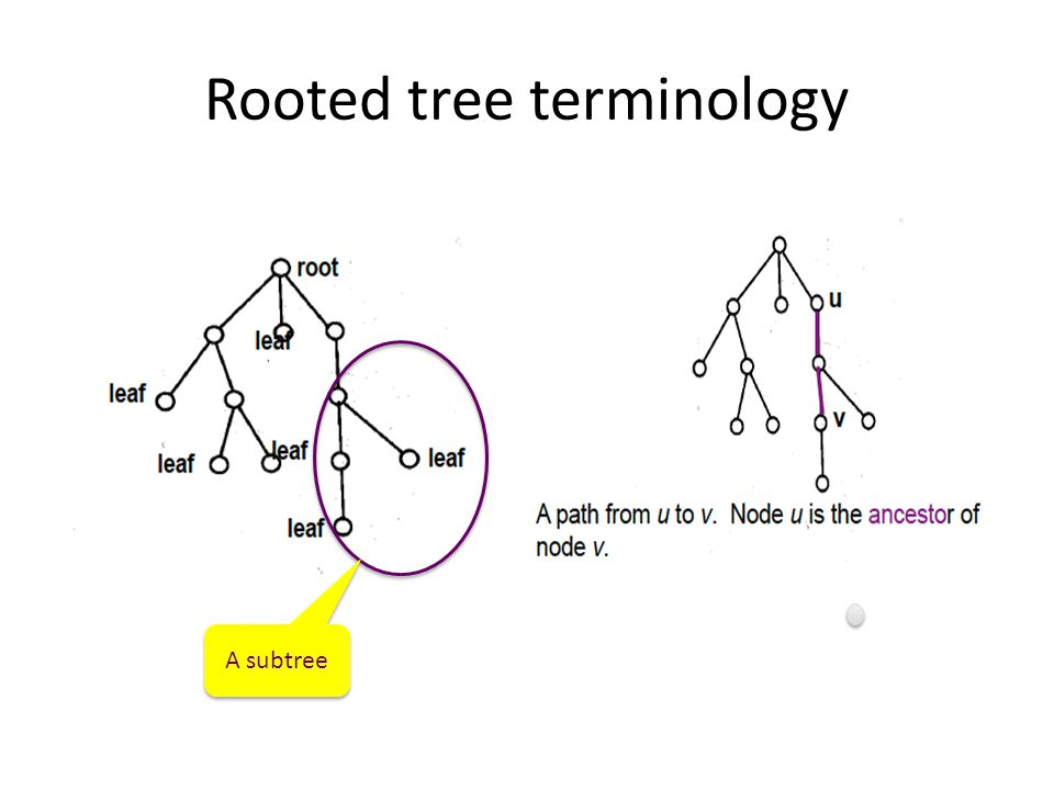 Rooted tree terminology
