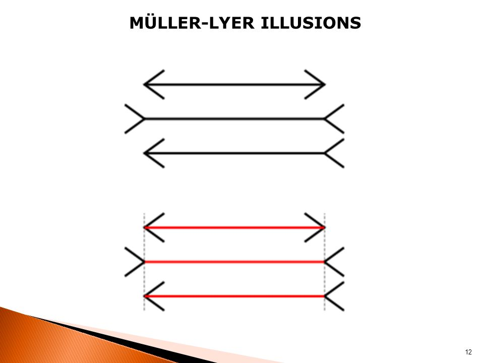 MÜLLER-LYER ILLUSIONS 12