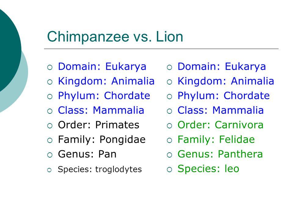 Chimpanzee vs.